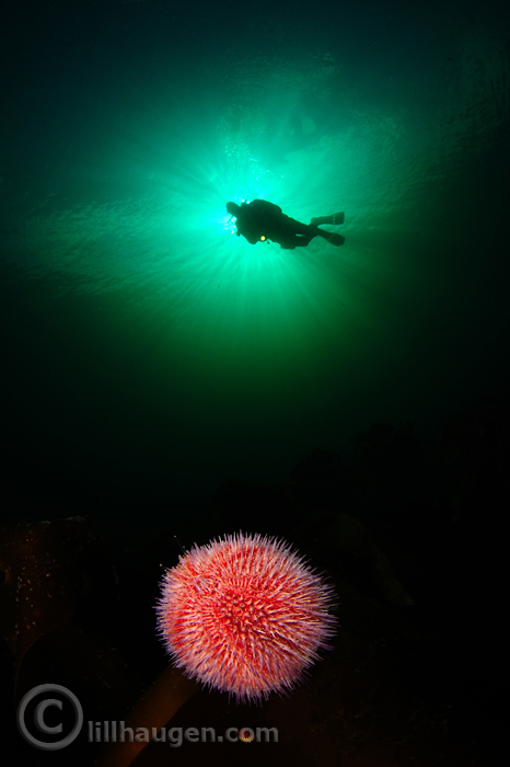 DSC_9309_NM_2013_WideAngle_Diver_700.jpg